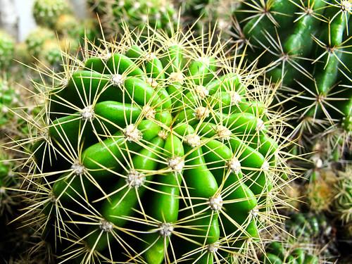 IMG_0196 Cactus
