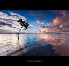 Rippled Reflections (itsgottabered) Tags: sea colour tree water clouds canon reflections ngc australia wideangle mangrove queensland ripples wello 1740lusm hitechfilters 5dmkii