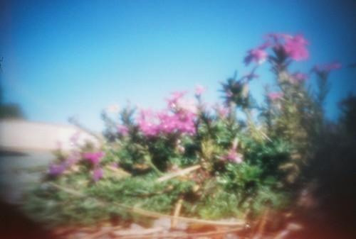 ut gardens (3)