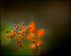 in motion (ronipothead) Tags: light flower color macro nature leaf nikon flickr afternoon images 1001nights bangladesh abstruct d90 lightcolor texturephoto texturebased