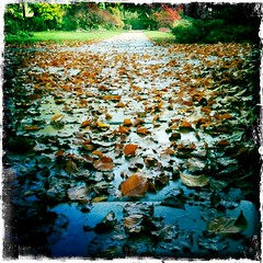 Leaves on wet stone (Katie Fuller @bogbumper) Tags: wet leaves rain stone paving beech slabs thelodge hipstamatic