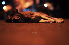 [313/365] Sick Dog (Dodzki) Tags: november nikon pcc 2011 cebusugbo d5000