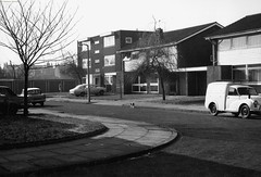 Cool cat in the suburbs (archivesplus) Tags: cats cat manchester archives lone manchesterlocalimagecollection gb127