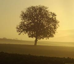 Chne solitaire (Pierre-Paul Feyte) Tags: tree oak arbre gascony gascogne gers chne