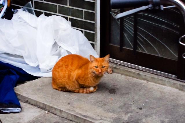 Today's Cat@2011-11-22