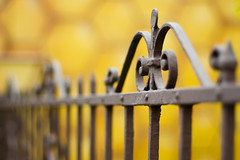 #090 ([ iany trisuzzi ]) Tags: yellow digital canon fence eos rebel dof bokeh depthoffield day90 50mmf14 xsi hff project365 365days 450d 90365 fencefriday