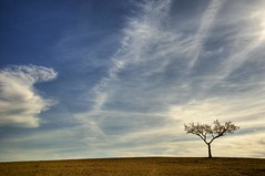 Alone at dusk / Solo al atardecer (Manuel Atienzar) Tags: sunset espaa tree landscape arbol atardecer evening spain dusk paisaje minimal minimalism minimalismo albacete castillalamancha petrola manuelatienzar mygearandme mygearandmepremium mygearandmebronze