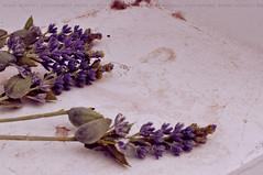 (aa) Tags: flowers 50mm nikon quote nikkor kayan d90 14g alhooti