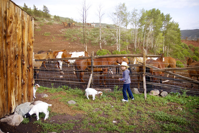 Black Mountain Colorado Dude Ranch girl horses fence