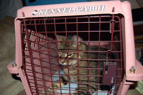 Jailed Cat is in Jail