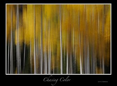 Chasing Color  __Robert Howell (Robert Howell _) Tags: autumn trees orange color fall colors yellow landscapes montana creative foliage fourseasons yellowstone wyoming aspen tetons roberthowell bobfotos flickrbobphotos roberthowellphotography