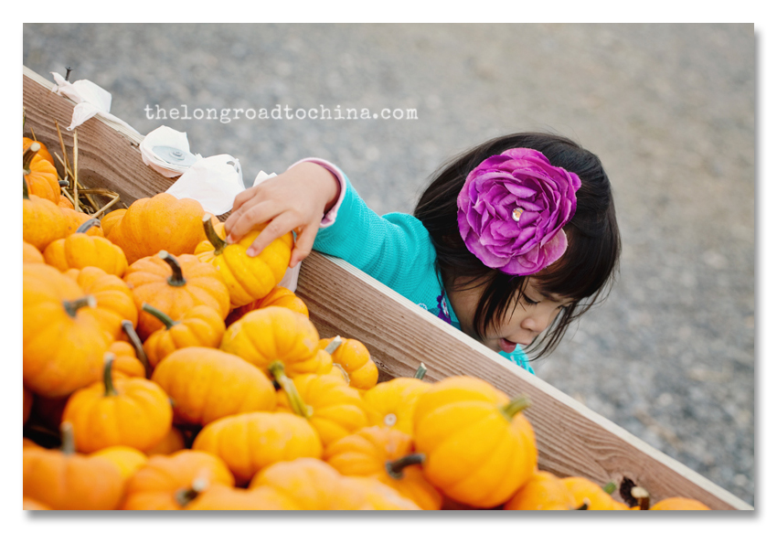 Picking Mini Pumpkins BLOG