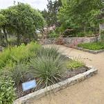 Ladybird Johnson Wildflower Center 4. thumbnail