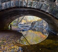 Eye. (Boreal Bird) Tags: autumn eye reflections duluth amitycreek