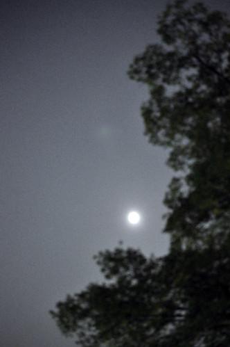 Woods&Moon