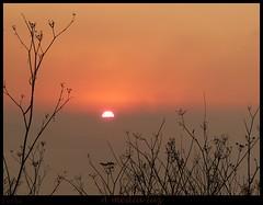 A media luz (terba80) Tags: sunset sun sol contraluz corua galicia puestadesol tere naranjas solpor arteixo terba terba80