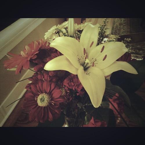 Gnomey's flowers