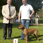 "Farouk wordt Beste Baby in Show @ BRRC Specialty <a style=""margin-left:10px; font-size:0.8em;"" href=""http://www.flickr.com/photos/68800547@N03/6257357420/"" target=""_blank"">@flickr</a>"