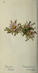 Anglų lietuvių žodynas. Žodis stemless daisy reiškia stemless margasis lietuviškai.
