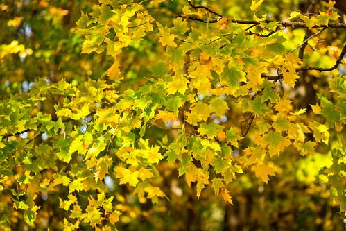 fall-9765.jpg