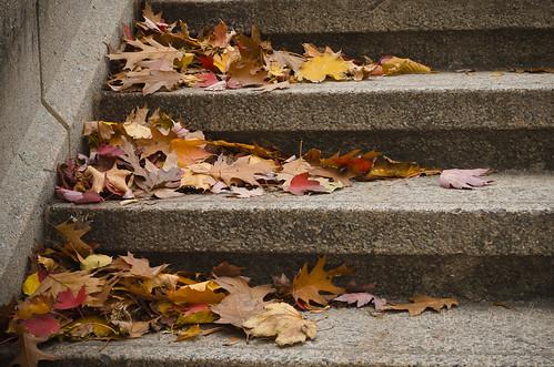 305:365 Leaves on the York Street Steps