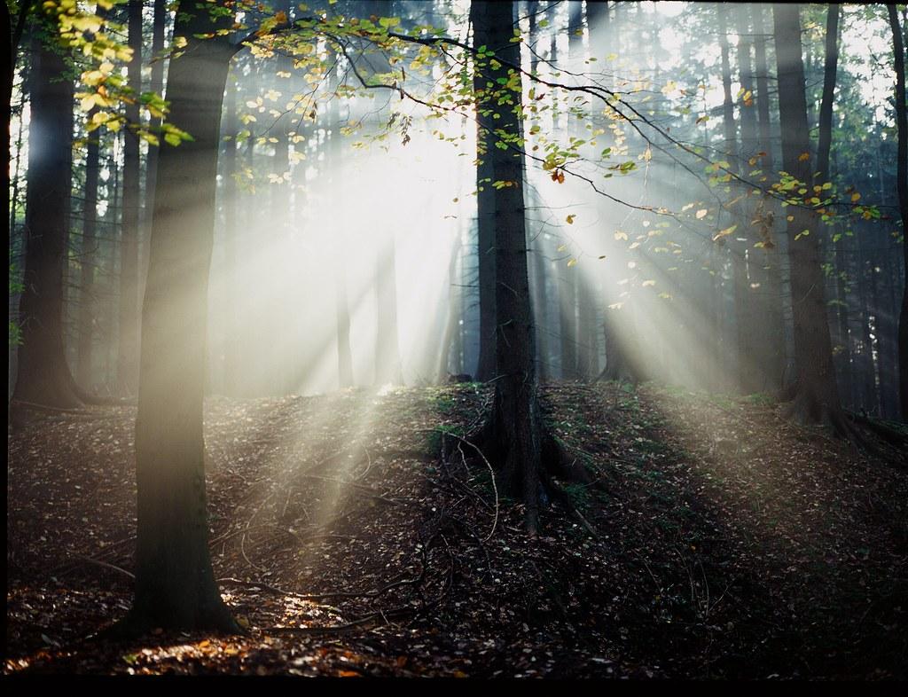 M64503 Světlo mezi stromy