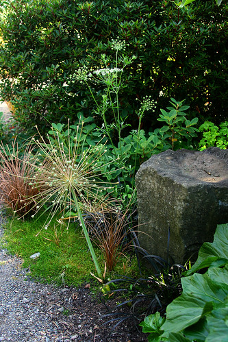 pathway planting