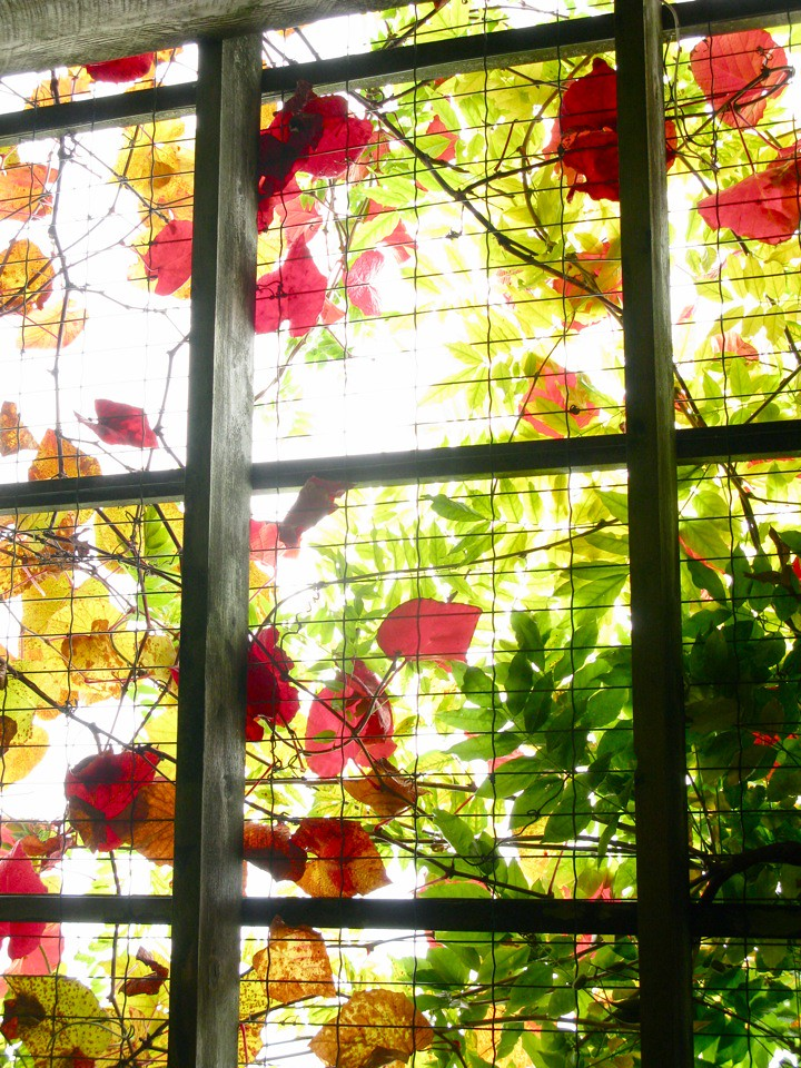 ubc botanical garden 005