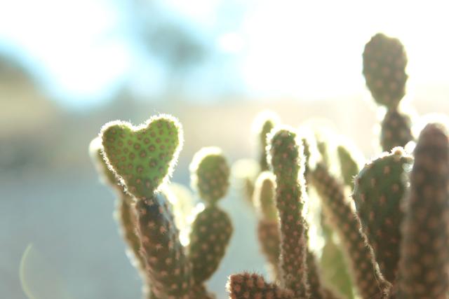 Cactus ♥