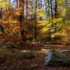 Fall (pierre hanquin) Tags: autumn trees color colour tree fall forest jaune automne landscape rouge nikon colours belgium belgique couleurs belgi arbres getty paysage landschaft spa arbre couleur fort lige 1685 d7000 1685mmf3556gvr mygearandme mygearandmepremium mygearandmebronze hanquin