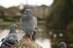 top tier (Simon Redhead Photography) Tags: pigeons coventry warwickshire sculptur sigma2470 coombeabbey canon7d
