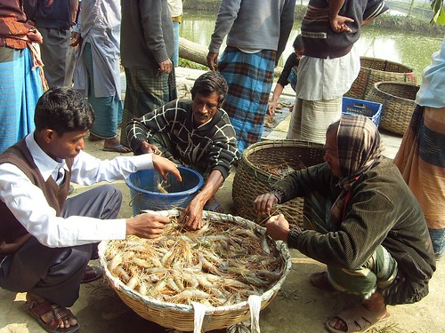 Market linkage has been established for selling the prawn produced in the area, which has resolved the marketing problem initially faced by the farmers. Photo credit to Winrock International.