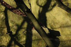 IMG_4870 (Josef Zeisel) Tags: wien natur wald stimmung wienerwald stille klosterneuburg ruhe schpfung achberg