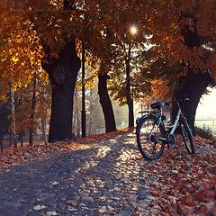 Such a Perfect Autumn Day.Bike on Autumn Path. Tanjica Perovic Photography. (Tanjica Perovic) Tags: morning autumn trees light sunlight mist leaves bike bicycle yellow backlight shadows serbia quay getty gettyimages fallenleaves srbija floodbarrier pirot kej kaldrma pirotskikej pirotsrbija tanjicaperovicphotography availableforlicensingongettyimages fotografijepirota barrieragainstflooding svetozarmisirlic floodingprotection