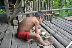 Bebe slicing a doerian fruit (Florafreak) Tags: food fruit kid young knife cutting bebe malvaceae mes pulau parang bijl manchete doerian mentawai siberut kapmes durio zibethinus sumaterazomer2011