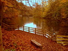 Gledhow Valley Woods: Lake platform (Tarif Ullah) Tags: cameraphone autumn trees england brown lake nature water leaves yellow bench golden wooden dock woods jetty leeds lakes platform autumnleaves landing autumncolors rivers creeks chapelallerton fallintoautumn gledhow gledhowvalleywoods woodsforests autumnfallcolorsandthemes