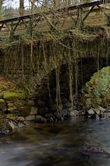 Overgrown Bridge (DMeadows) Tags: bridge autumn fall overgrown fence river scotland vines stream arch stonework burn archway creepers reclaimed stonemasonry davidmeadows dmeadows yahoo:yourpictures=waterv2 yahoo:yourpictures=myautumn