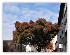 Ein Herbsttag in Kassel/Nov. 2011 (Ela2007) Tags: sky tree hessen herbst himmel wolken baum kassel hesse