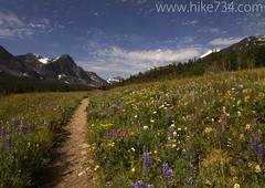 "Cutbank trailhead with flowers • <a style=""font-size:0.8em;"" href=""http://www.flickr.com/photos/63501323@N07/6389760719/"" target=""_blank"">View on Flickr</a>"
