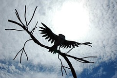 Spread My Wings and Fly (TheJudge310) Tags: sky sun silhouette wisconsin clouds downtown bright august nikond70s explore owl greenbay 2011 flickrexplore