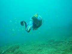 Compaeritos de farra (Z.Valdi) Tags: grancanaria underwater sub canarias canaryislands photosub