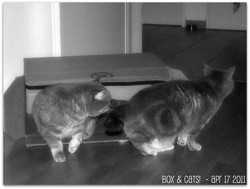 Box & Cats!  - Apr 17 2011
