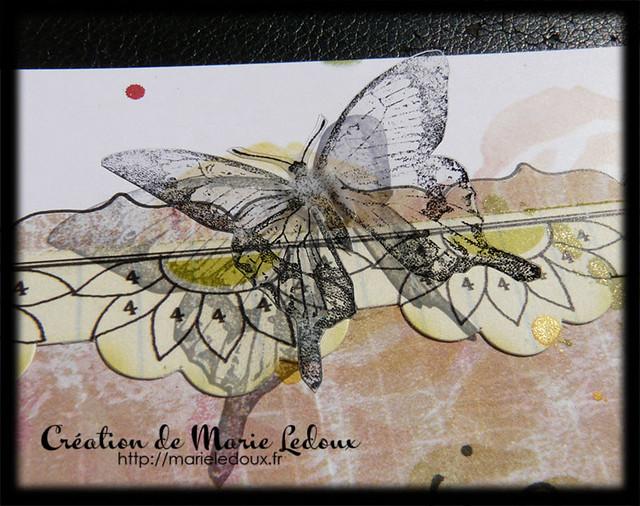 Zoom sur le papillon