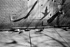 The Birds (Hunchentoot) Tags: leica nyc newyorkcity shadow blackandwhite bw usa newyork bird film birds animals wall analog america 35mm tiere kodak pavement manhattan pigeon wand pigeons trix rangefinder summicron sw kodaktrix agfa rodinal amerika vgel taube schatten vogel leicam7 2010 m7 tauben hauswand brgersteig housewall agfarodinal schwarzweis weitz kleinbild 35mmsummicronm messucher ediweitz bwfp edmundweitz