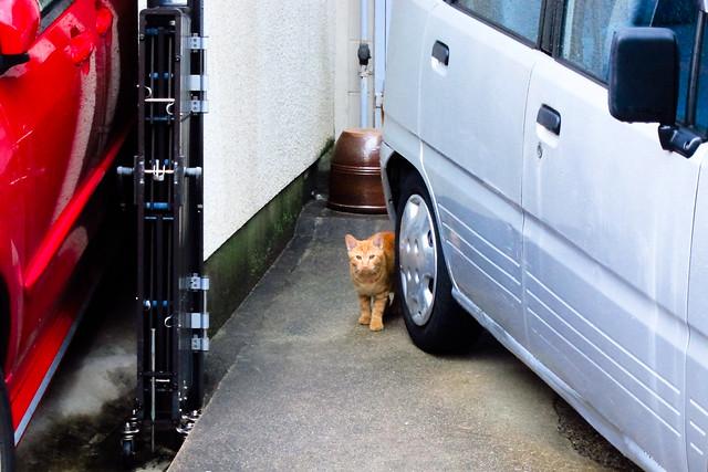 Today's Cat@2011-10-06