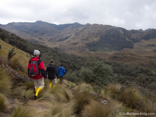 It's rare to see a forest at 4,000 meters