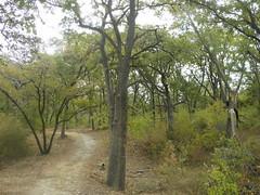 Loy Lake Trail