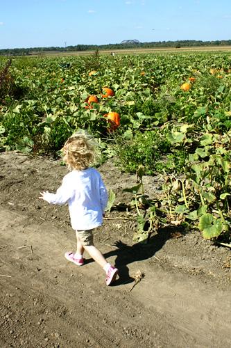 Aut-running-through-pumpkins
