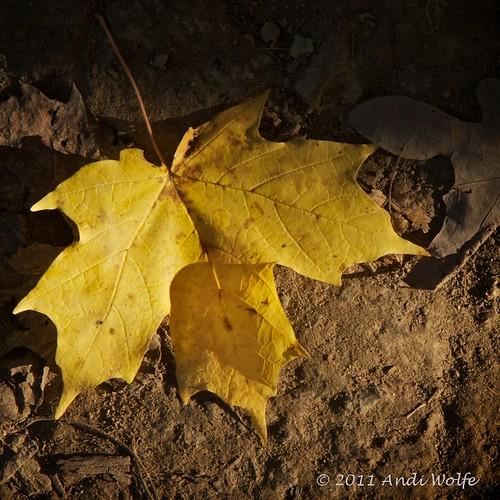 Autumn Leaf by andiwolfe