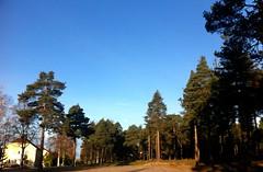 (inte) Måne över Haväng (TinaOo) Tags: trees moon heaven himmel skog rgb träd måne farg fotosondag fs111016